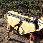 It may look the part, but will the CoyoteVest protect your hunting buddy from an attack?