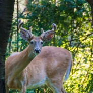 Ann Arbor's controversial deer cull ended on March 1, but activists have not given up on their message just yet.