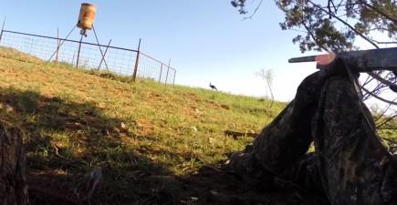 turkeysnakehunting321