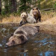 bearbathtub415