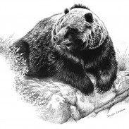 bearbow