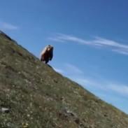 bearhiker411