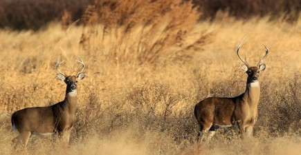 CWD may have only been recently announced in Arkansas, but officials suspect it has been there for some time.