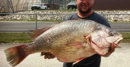 It's not only perspective that makes this fish look big, it's about 33 inches long.