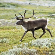CWD was discovered by European researchers in Norway.