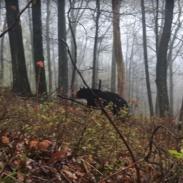 PA Bear Run-in screen-shot