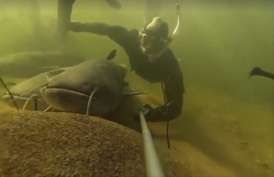 Snorkel Wels catfish 5-2