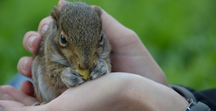 Squirrel 5-23-16