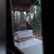 moose wind chime