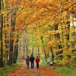 The study found that taking group nature walks can help to significantly lower depression.