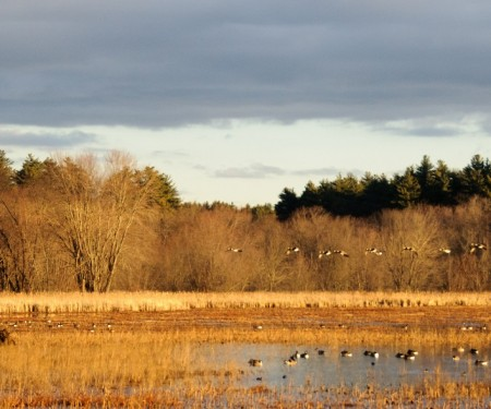 The Great Meadows National Wildlife Refuge in Concord, Massachusetts holds a host of trails and chance to see all kinds of wildlife. Image courtesy of Larry Warfield.