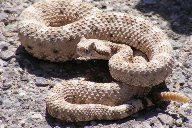 Snakes on the Trail | ActionHub
